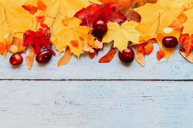 Foglie di acero autunnali secche rosse e gialle, castagne, semi di acero e un rametto di larice con coni, in cima in fila su uno sfondo di legno blu. spazio per il testo
