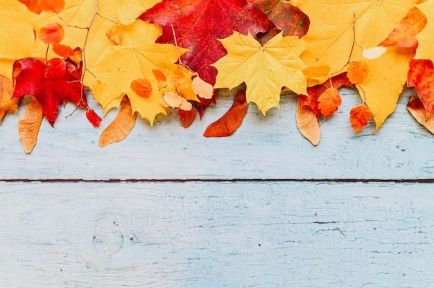 Foglie di acero autunnali secche rosse e gialle, in cima in una riga su uno sfondo di legno blu. concetto di caduta. piatto, spazio per il testo