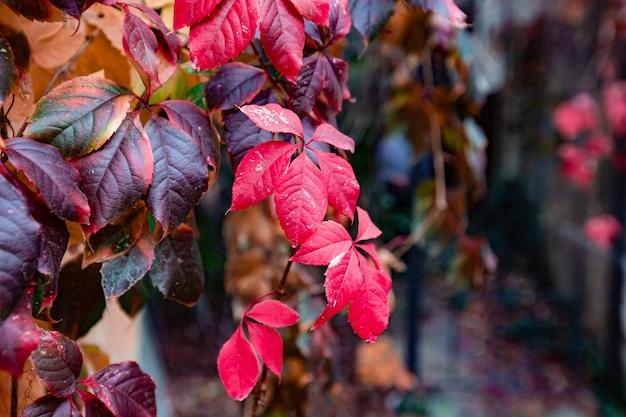 Foglie rosse e gialle in autunno