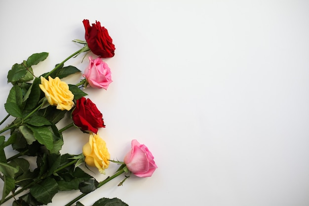 Rose rosse, gialle, rosa su bianco. vista dall'alto