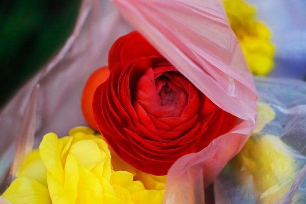 Ranuncolo rosso e giallo nel sacchetto di plastica concetto di inquinamento del pianeta e materiali non riciclabili