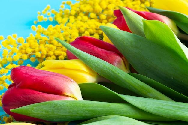 Tulipani rossi e gialli e mimosa gialla su sfondo blu. fiori primaverili per l'8 marzo. banner floreale