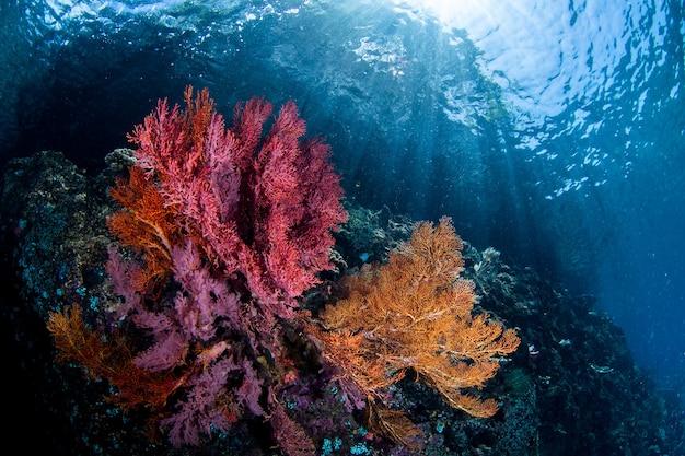 Barriera corallina sotto l'acqua cristallina