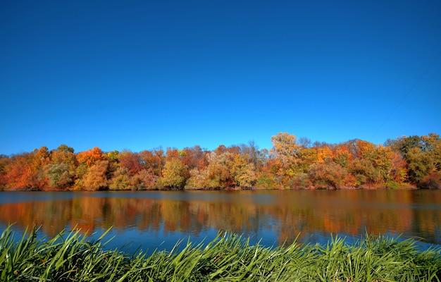 La riflessione di una bellissima foresta d'autunno nel fiume, sullo sfondo di un cielo azzurro senza nuvole, con il verde carice in primo piano