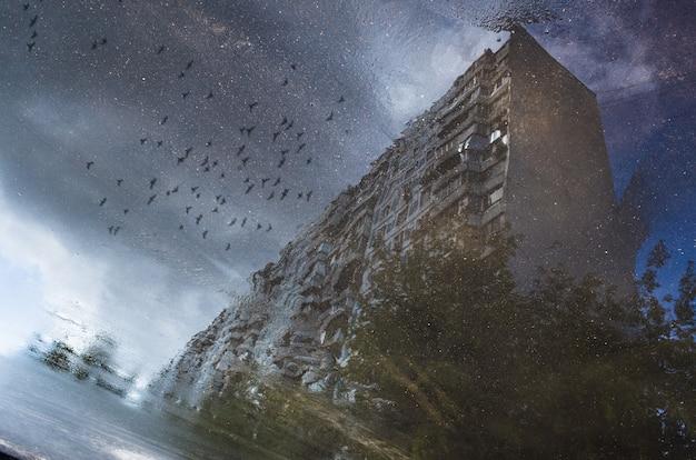 Riflessione di un edificio e uccelli in volo in una pozzanghera sull'asfalto dopo una pioggia