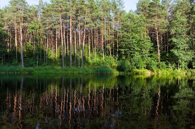 Riflessione di conifere nell'acqua di un lago durante il tramonto, cielo blu
