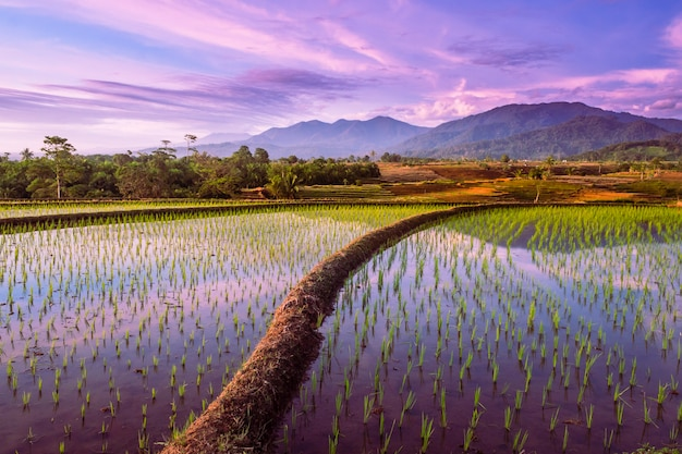 La riflessione del cielo al tramonto con le montagne nell'acqua di terrazze di riso in kemumu, bengkulu utara, indonesia