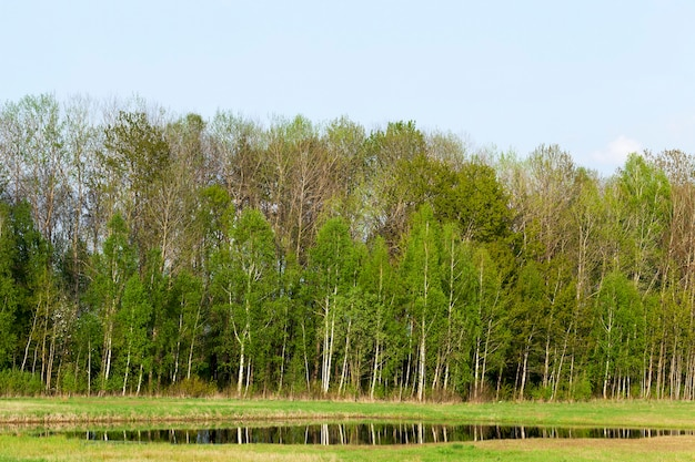Riflessione di alberi ed erba in una grande pozzanghera dopo le ultime forti piogge