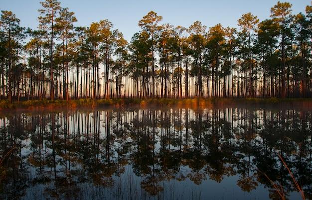La riflessione degli alberi nell'acqua del lago la sera al tramonto, la luisiana, usa