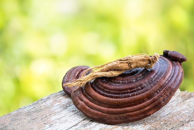 Reishi, fungo lingzhi e ginseng su sfondo naturale