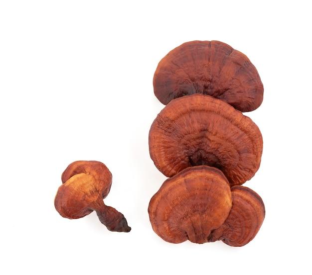 Reishi o fungo lingzhi isolato su sfondo bianco con tracciato di ritaglio.