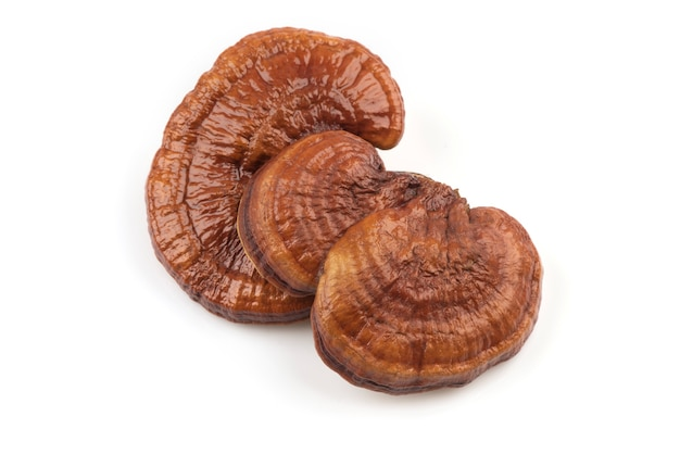 Reishi o funghi lingzhi isolati su bianco.