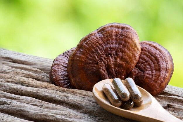 Reishi o fungo lingzhi e polvere in capsula su sfondo naturale.