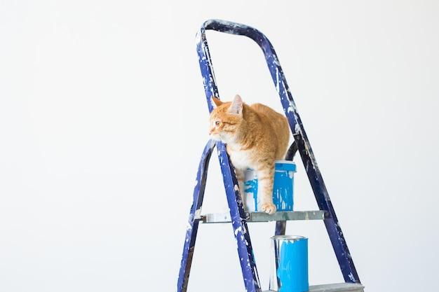 Ripara, dipingendo le pareti, il gatto si siede sulla scala a pioli. foto divertente con copia spazio