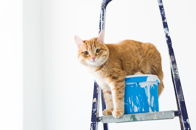 Ripara, dipingendo le pareti, il gatto si siede sulla scala a pioli. foto divertente