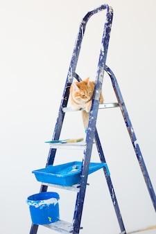 Ripara, dipingendo le pareti, il gatto si siede sulla scala a pioli. foto divertente.