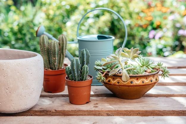 Rinvaso di piante grasse e cactus nel giardino di casa