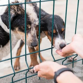 Ai cani da salvataggio vengono dati dei dolcetti dietro il recinto nel rifugio per l'adozione