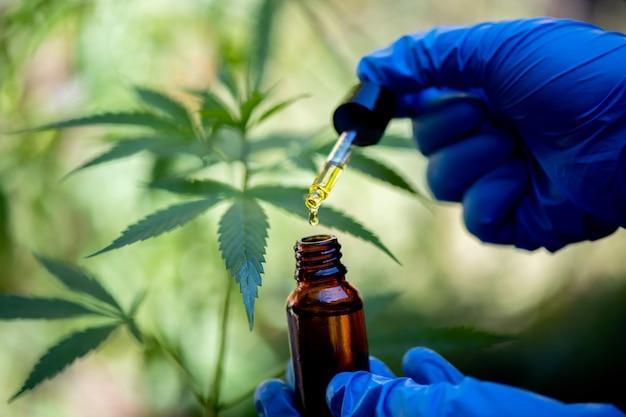 Il ricercatore tiene una bottiglia di olio di canapa, prodotto a base di marijuana per uso medico