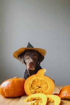 Cane da riporto in cappello nero e zucca vestito di halloween autunno concetto con una zucca