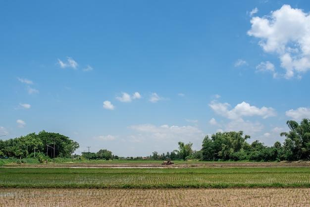 Risaia campi di riso verde con bellissimi cieli blu.