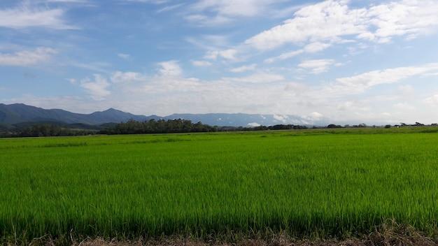 Paesaggio del campo di riso, montagna e cielo blu con nuvole