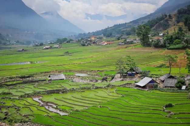 Terrazze di campi di riso
