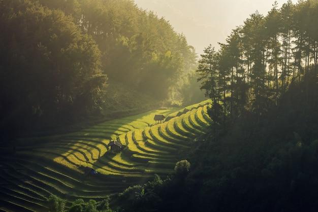 Campi di riso sulla terrazza nella stagione delle piogge a mu cang chai, yen bai, vietnam. i campi di riso si preparano per il trapianto nel vietnam nordoccidentale