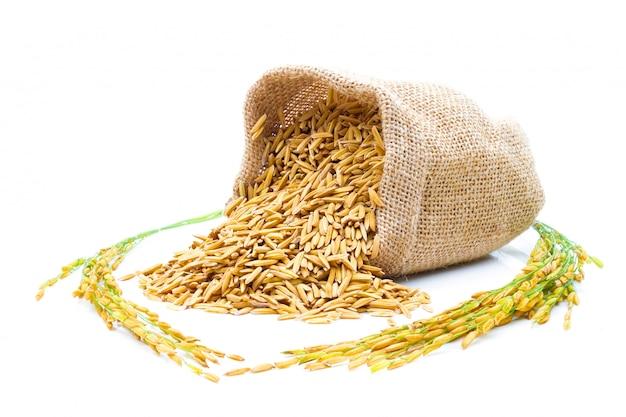 Riso di risaia giallo dorato in un sacco su bianco