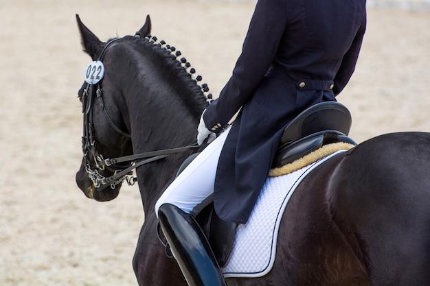 Il cavaliere in abito bianco e nero svolge il compito nelle competizioni equestri di dressage in sella a un bellissimo cavallo della baia, vestito di munizioni