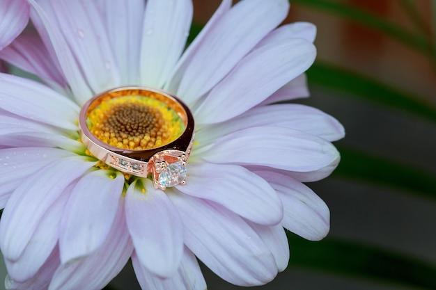 Anelli su margherita bianca amano san valentino di gerbera bianca e fedi nuziali in oro