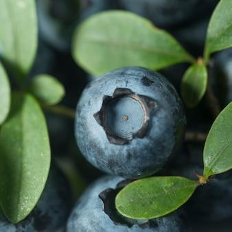 Close-up di mirtilli maturi su cespugli con foglie verdi