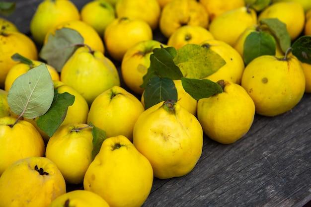 Frutti di mela cotogna gialli dorati maturi isolati su fondo di legno
