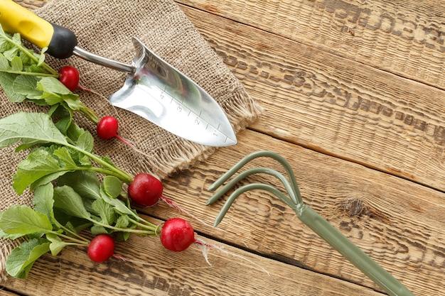 Ravanelli rossi maturi e rastrello a mano, pala su tela di sacco e vecchie tavole di legno. vista dall'alto. raccolta primaverile degli ortaggi in giardino.