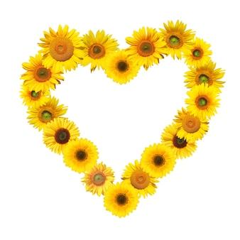 Girasole maturo con petali gialli e mezzo scuro Foto Premium