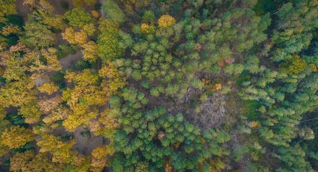 Vista aerea della foresta di autunno e del fiume