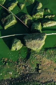 Riva del fiume con acqua sporca, pietre e fioriture di alghe