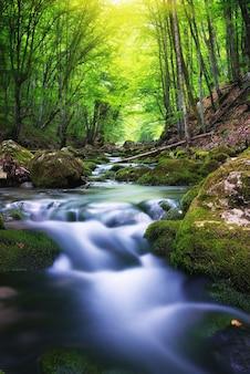 Fiume profondo nella foresta di montagna. composizione della natura.