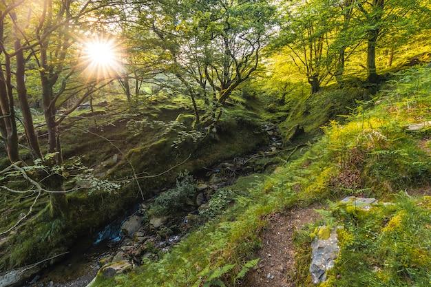 Un fiume nel mezzo di una foresta di faggi lungo il sentiero fino al monte adarra a urnieta, vicino a san sebastian. gipuzkoa, paesi baschi