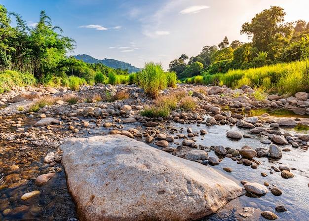 Pietra e albero del fiume, albero del fiume dell'acqua di vista, fiume di pietra e foglia dell'albero nella foresta