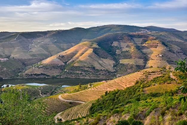 Fiume circondato da montagne coltivate a vigneti