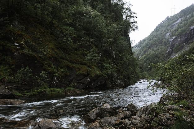 Acqua di fiume che scorre attraverso le rocce nella foresta
