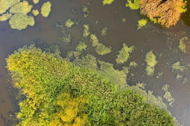 Fiume con canna verde che cresce sui lati dalla prospettiva aerea Foto Premium