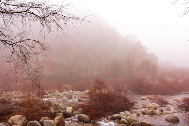 Fiume con pietre e alberi secchi in una giornata nebbiosa fiume misterioso e magico messa a fuoco selettiva