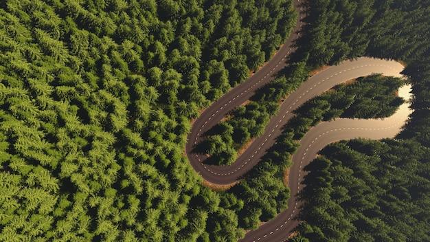 Strada tra la foresta vista dall'alto confronto delle arterie del fiume