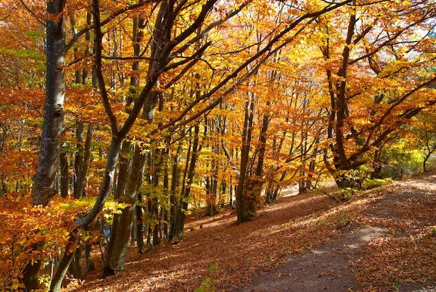 Strada nella foresta di autunno con alberi gialli