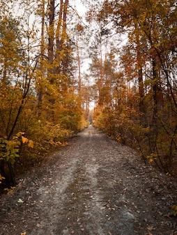 Strada nella foresta d'autunno.