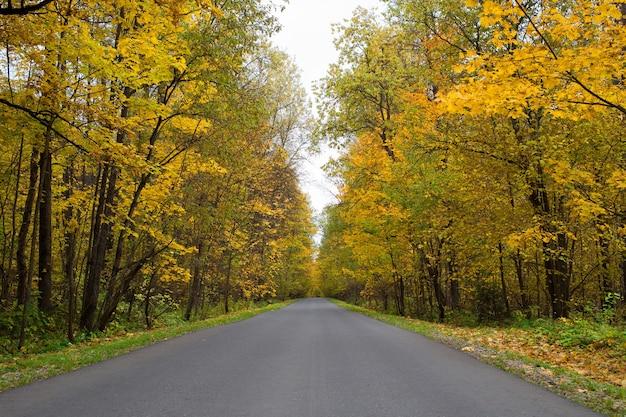 Strada nella foresta d'autunno
