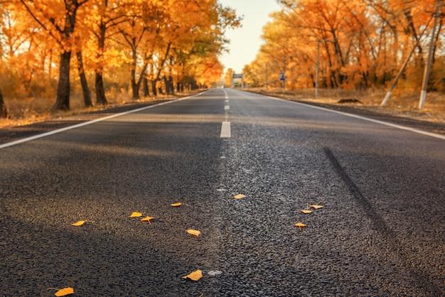 Strada verso l'autunno