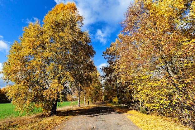 Strada in autunno